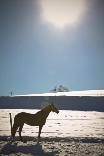 Pferd-im-Schnee-Glarean-Magazin