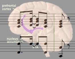 Musik und Hirnforschung-Glarean-Magazin